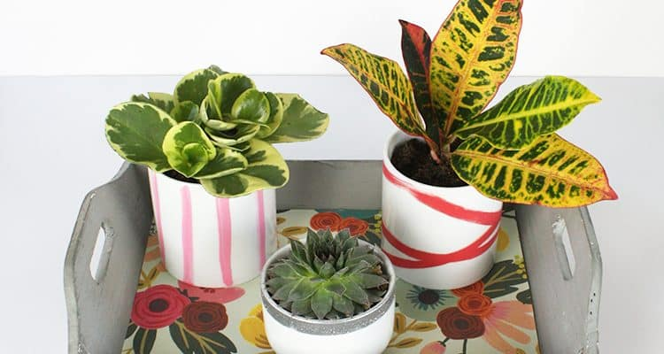Plant-Tray